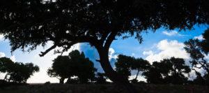 Atlas Aventura Viajes Marruecos
